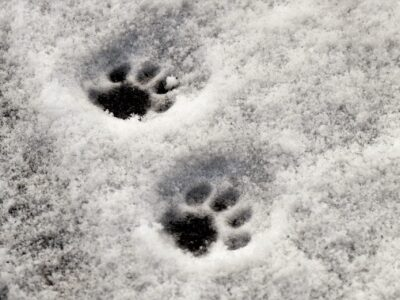 traces-neige